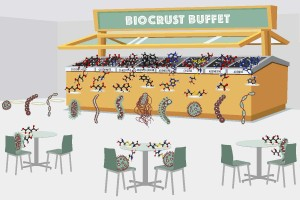 Biocrust-Buffet-Illustration_v4_6x4-1